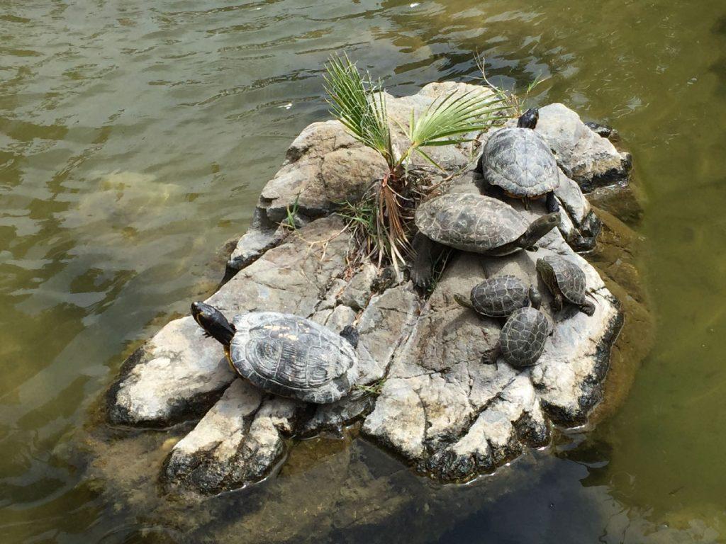 TurtlesLosMonteros